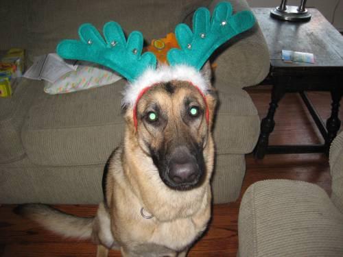 Max, 12/25/2008
